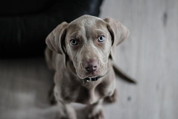 żwacze wołowe dla psa